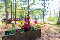 Two-Inlets-Resort-Grounds-05-2